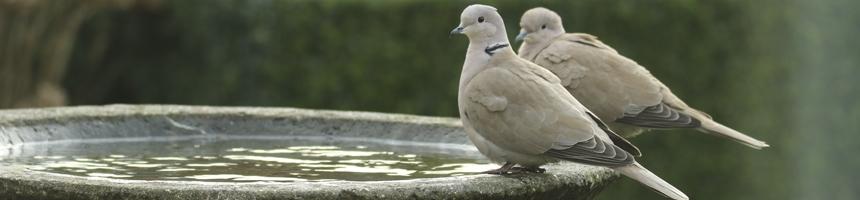 Vogeldrinkschaal natuursteen